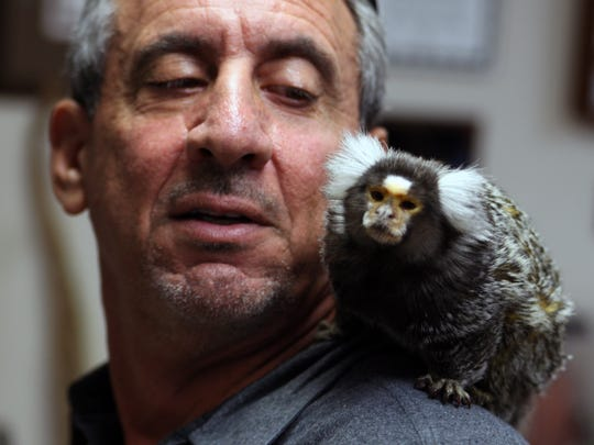 Monterey Zoo director Charlie Sammut whispers in the ear of his long-time office mate, Mona, a common marmoset