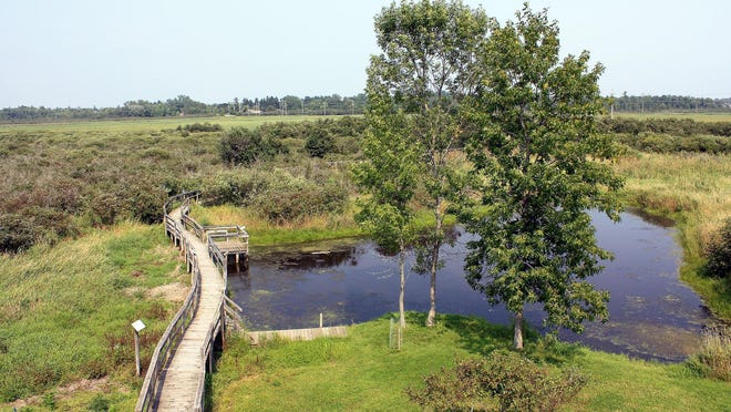 A boardwalk winds through marsh and swampland at Woodland Dunes Nature Center in Two Rivers.