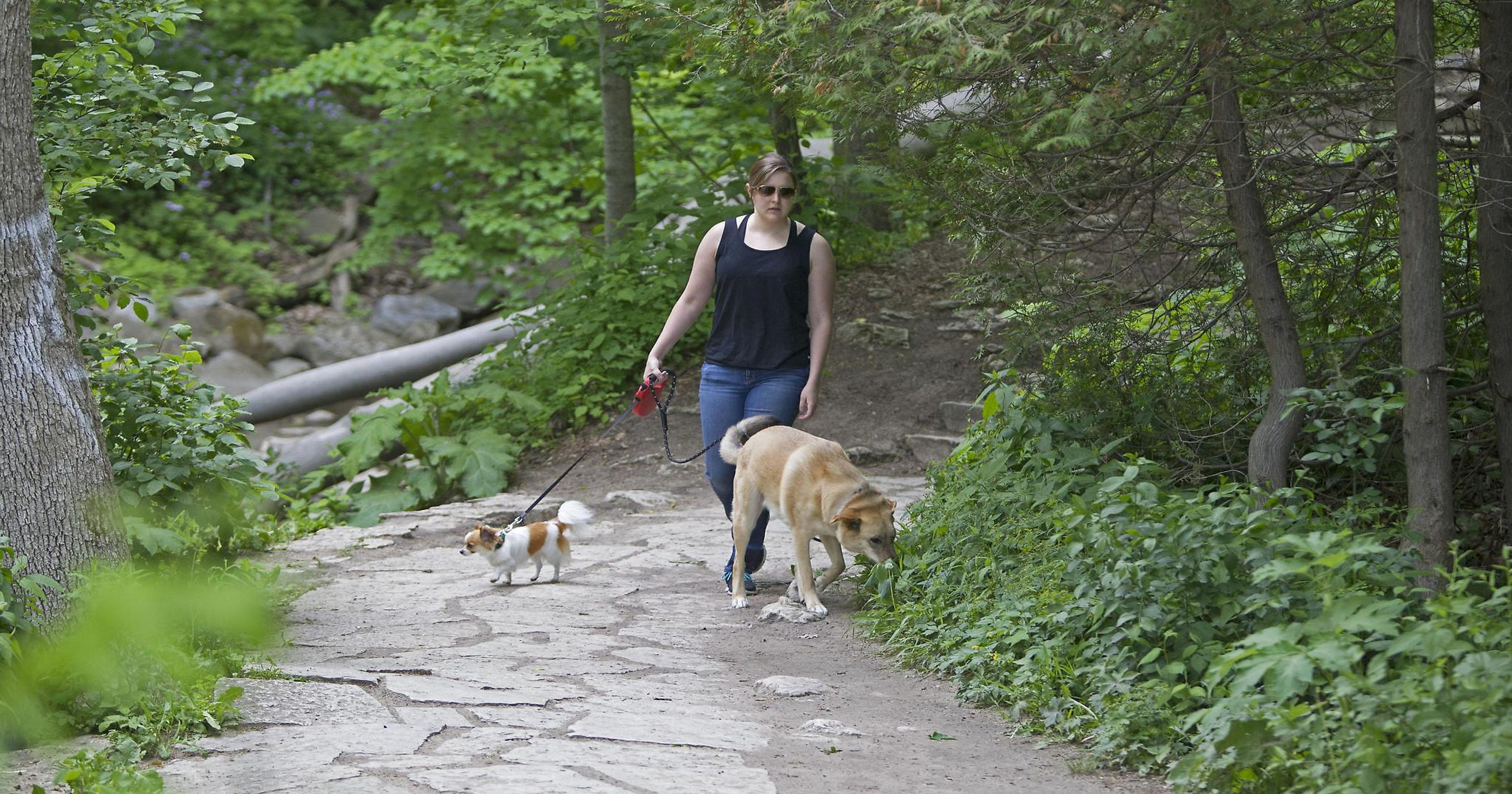 8 dog-friendly places in Milwaukee