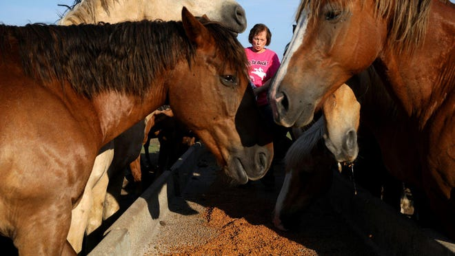 Lenora Calzavara feeds her 38 rodeo horses at her farm, Big Hat Rodeo Ranch, July 2, 2020, in Harvard. Big Hat Rodeo canceled all 10 of its Midwest rodeos this year.