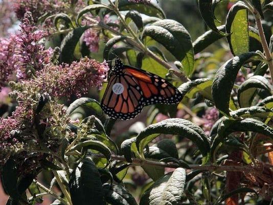 Tagged Reno monarch