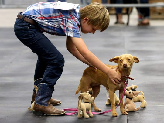 William Sullivan performs a trick with Taco Bell during the 82nd Nueces County Junior Livestock Show Fun & Free Dog Show on Saturday, Jan. 14, 2017, at the Richard M. Borchard Fairgrounds in Robstown.