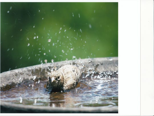 Shallow bird baths are best for the smaller birds that