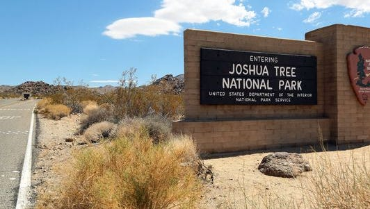 Several trails have been closed in Joshua Tree National Park to accomodate nesting raptors.