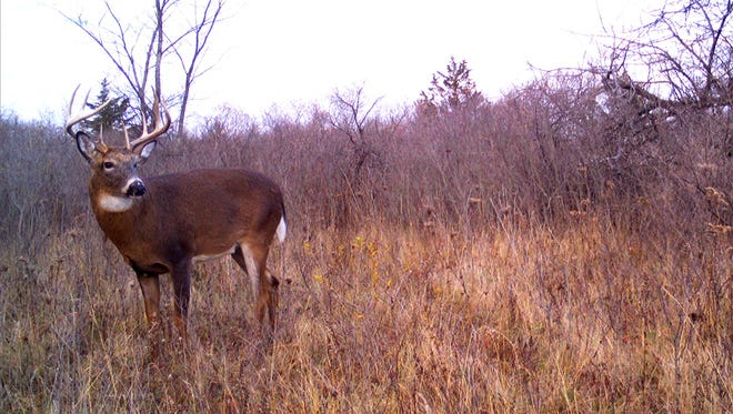 Three deer farms in northern Wisconsin remain in operation despite finding increasing numbers of CWD in their herds.