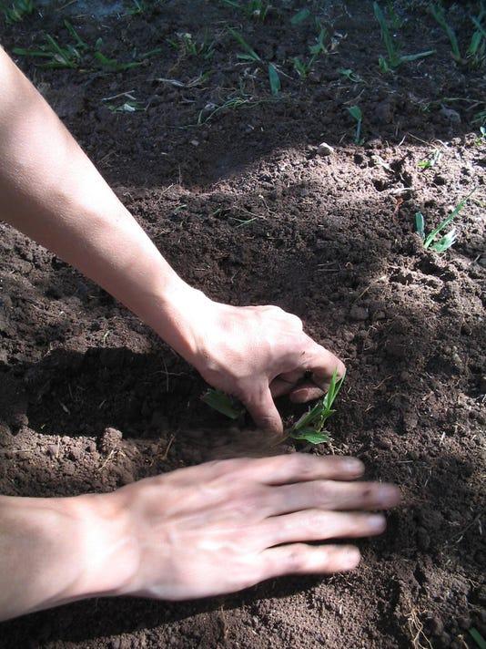 gardening-3-1257590 (1)