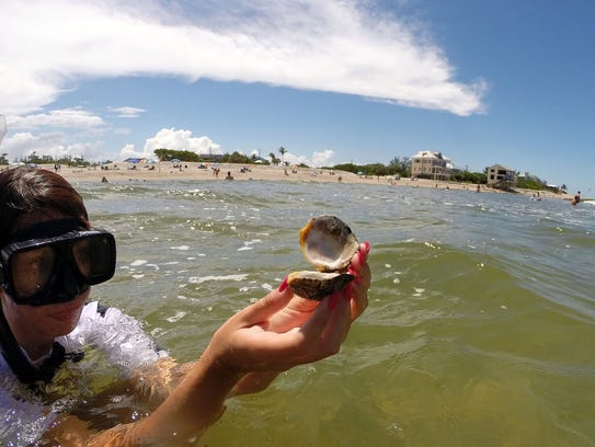 Amanda Hicks holds a clam she found at Bathtub Reef