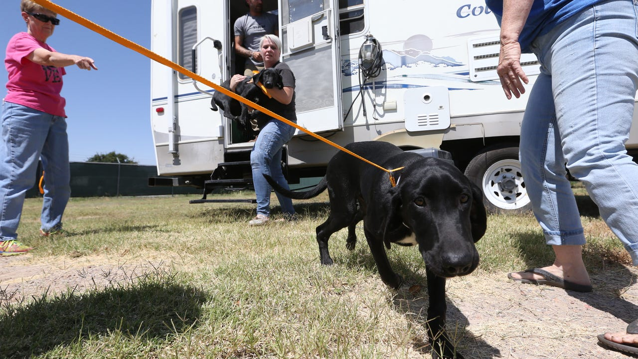 Rescued Houston pets arrive in El Paso for adoption