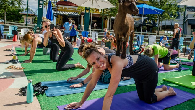 "A playful goat was among those that drew the attention of passersby and participants, pictured, at ""Goat Yoga"" held recently at Harbourside Place in Jupiter."