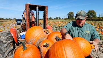 Marine City sets unofficial Guinness World Record for pumpkin carving