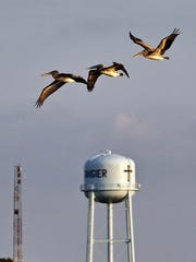 Birds fly above the Tangier Island water tower.