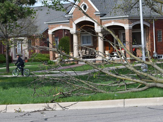 A tree branch fell down Oakman Boulevard near Warren in Dearborn on Friday after high winds swept through the area.