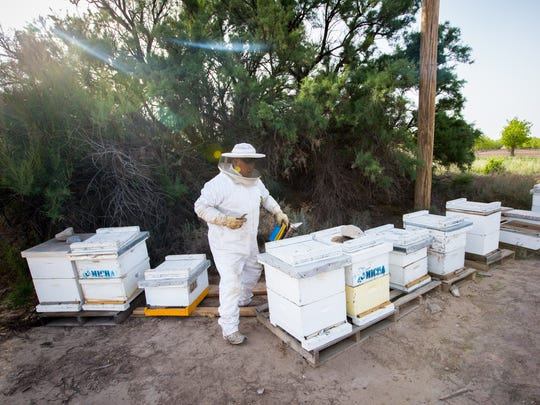 Beekeeper Harold Shumate looks after one of his hives near Vinton, Texas. Shumate estimates that each box of bees can produce 140 pounds of honey.