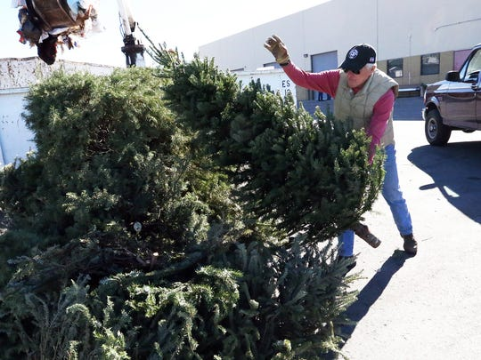 Living Christmas trees like these can be recycled at any of the city's Citizen Collection Stations after Christmas. Call 3-1-1 for information.