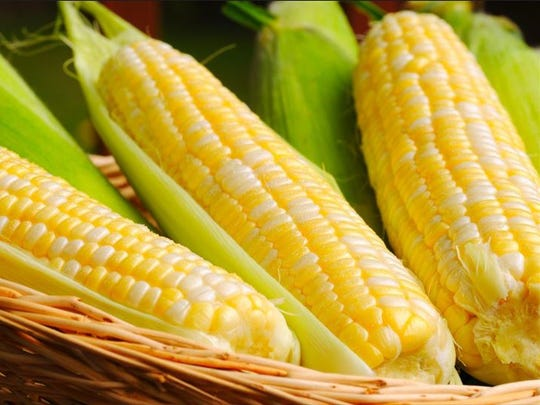 The summer heat and rain have been great for corn.