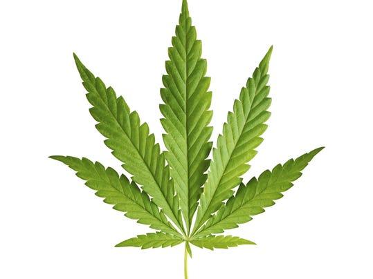 MGMBrd_08-17-2014_Advertiser_1_B003~~2014~08~16~IMG_marijuana.jpg_1_1_9V891G.jpg