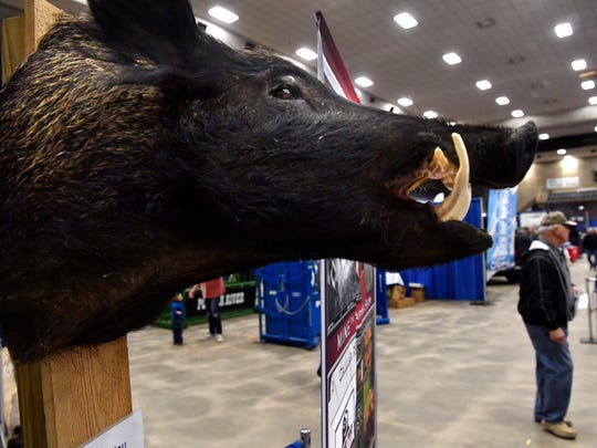 A wild hog mount hangs beside the Lone Star Hog Trappers booth Tuesday Feb. 20, 2018 at the Texas Farm - Ranch - Wildlife Expo at the Taylor County Coliseum. The show continues Wednesday.