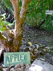 A hand-painted signs point out trees that grow apples