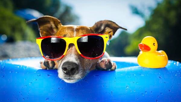Take the dog and the family on a field trip to Adventure Science Center's Dog Days of Summer.