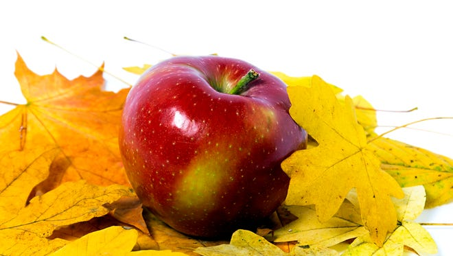 October is the height of apple harvesting and time to indulge in one of nature's greatest gifts to mankind.
