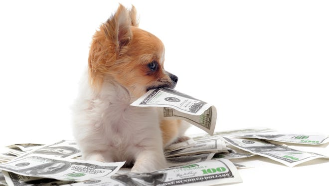 chihuahua and dollars