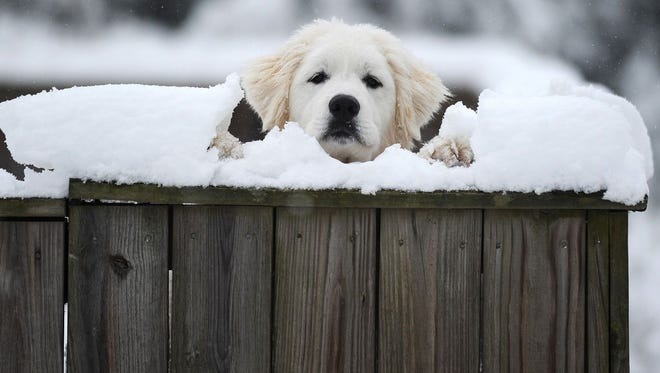 A dog peeks over its snow-covered fence on Tazwell Avenue in Cape Charles, Va. It's illegal to leave animals outside in such conditions in Indianapolis.