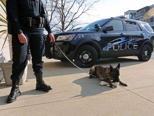 New Port Huron police dog, Knight, chews on a bone Wednesday, April 13, at Dorothea Knight's home in St. Clair Township.