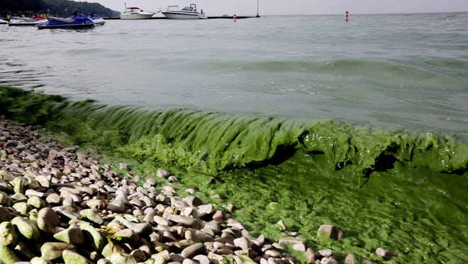 Algae washes ashore off  South Bass Island State Park, Ohio in Lake Erie July 29, 2015. A algae bloom turned the water green at the park.