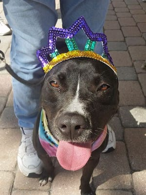 Ruby, modeling her fancy tiara, is getting ready for the party!