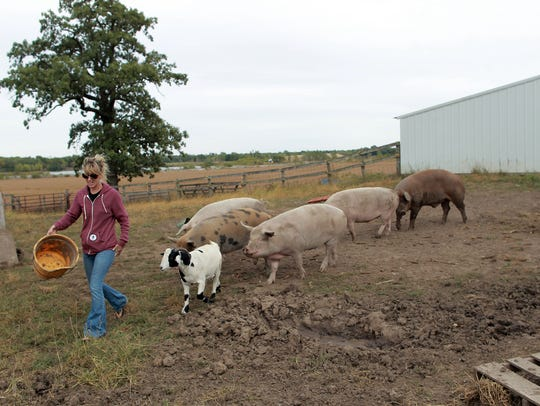 Shawn Camp rounds up rescued farm animals at the Iowa