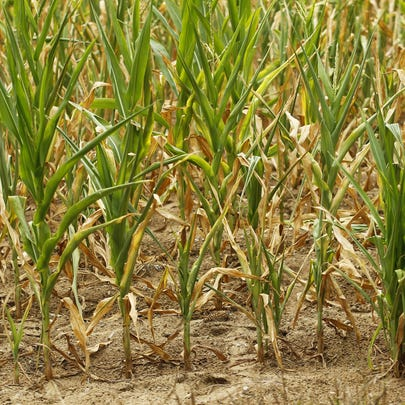 Severe drought conditions like Indiana endured in 2012,