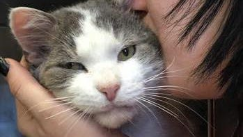 Rescued by the Cumberland County SPCA, Henry is now a popular therapy cat at Xenia Hospice and Palliative Care in Pennsylvania.