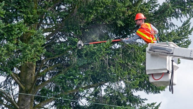 Electric companies are required by law to maintain the necessary clearance between trees and power lines.