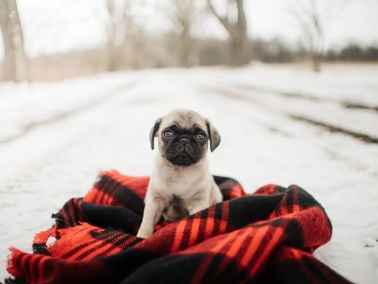 Local photographer Erin Ryall-Santo held a puppy photo