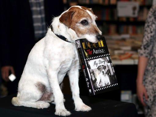 Uggie Rescue Dog