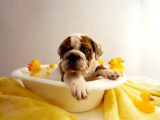 Doggie bath