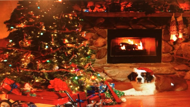 Maggie Mae, the St. Bernard, relaxes on Christmas Day after a season of helping at the Christmas tree farm.