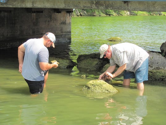 Lake Austin Zebra Mussel Inspection