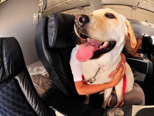 Pet Shipping and Pet Transportation Services with Pet Air. Welcome bestsupsm5.cf At Pet Air we strive to provide affordable, professional animal transportation in .