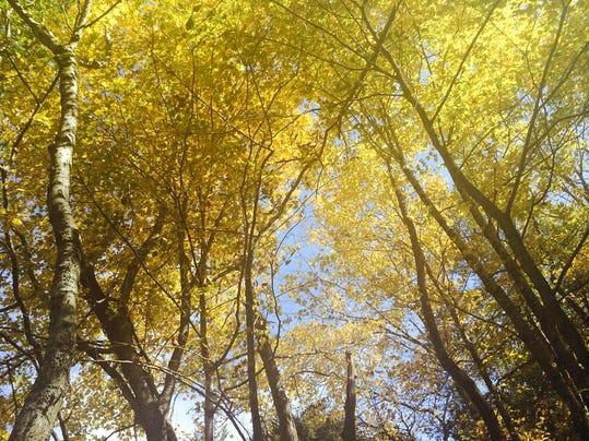 Trees_1