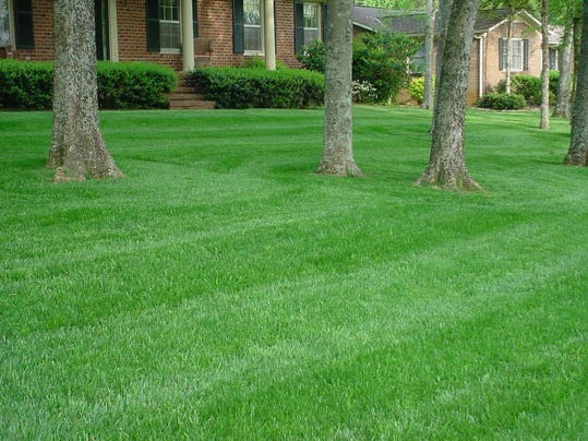 Example of proper mowing by M. Mote, 2016