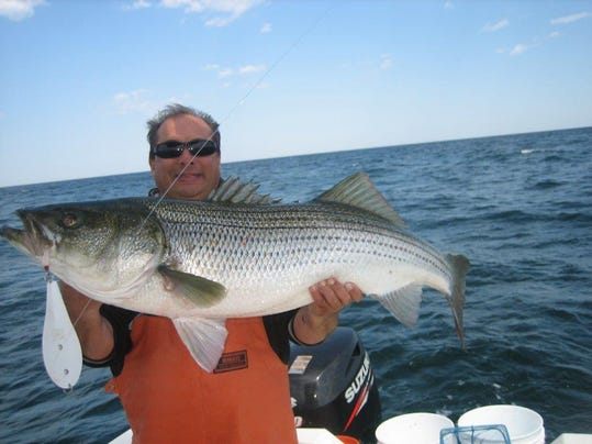 Ocean facts how well do you know your striped bass for Ocean city nj surf fishing report