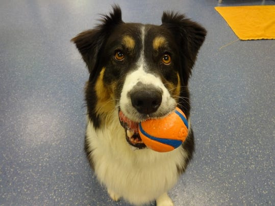 Four Paws Pet Hotel And Resort Fort Collins Co