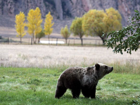 Bear File Photo