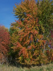 Foliage colors reached their peak during mid-October