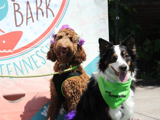 Knoxville's Bike Boat Brew & Bark event will take place
