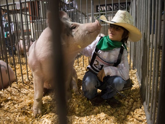 Livestock competitions and exhibitions include steer, heifers, swine, goats, lambs, rabbits, guinea pigs and poultry and are a big part of the Martin County Fair.