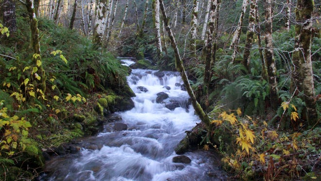 A creek drops down into the Siletz River along the road that leads to the Valley of the Giants.