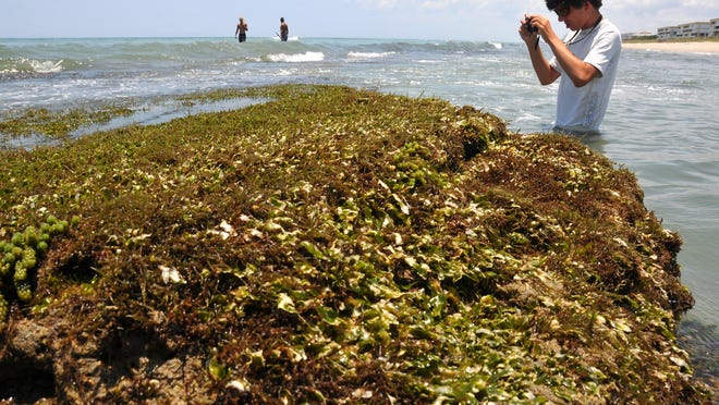 In this 2012 photo, Colie Daniel, of Indialantic, was out with his waterproof camera taking photos of the living plants and sealife that live on the wormrock in Satellite Beach. The rock, exposed more than usual from the low tide and the full moon, has held up a major beach renourishment project in the area.