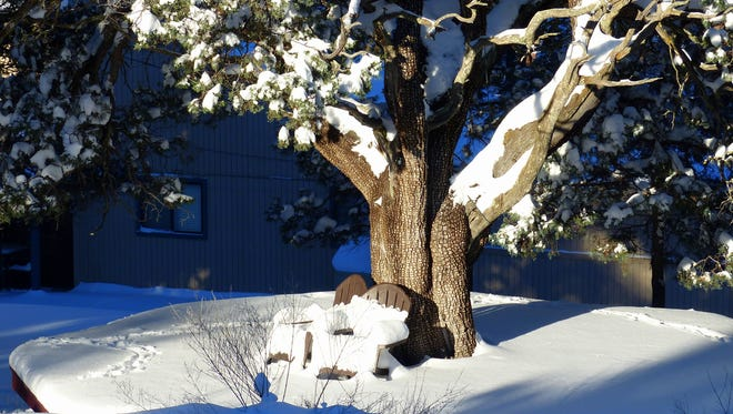 Deer tracks are visible in the snow on a deck under a juniper tree in Ruidoso.
